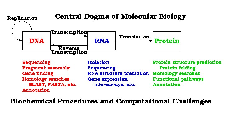 Central Dogma Related Keywords & Suggestions - Central Dogma Long Tail ...